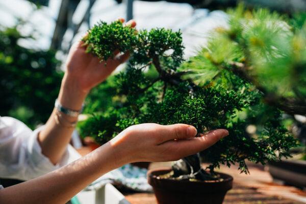recovery bonsai bologna